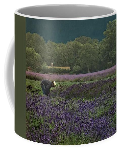 Lavender Fields Coffee Mug featuring the photograph Harvesting The Lavender, Long Island by Cheryl Kurman