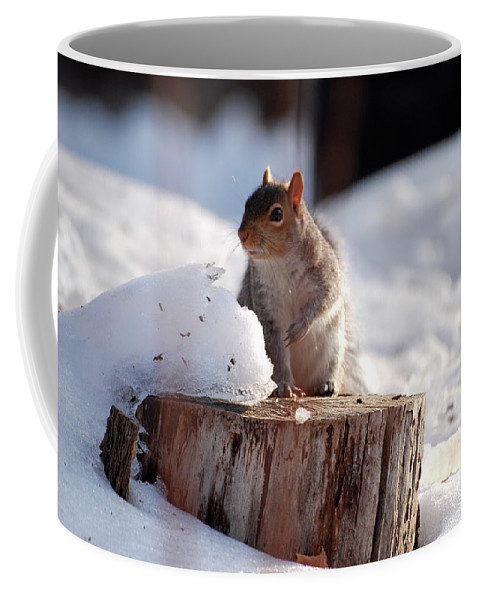 Squirrel Coffee Mug featuring the photograph Has Anyone Seen My Nuts by Lori Tambakis