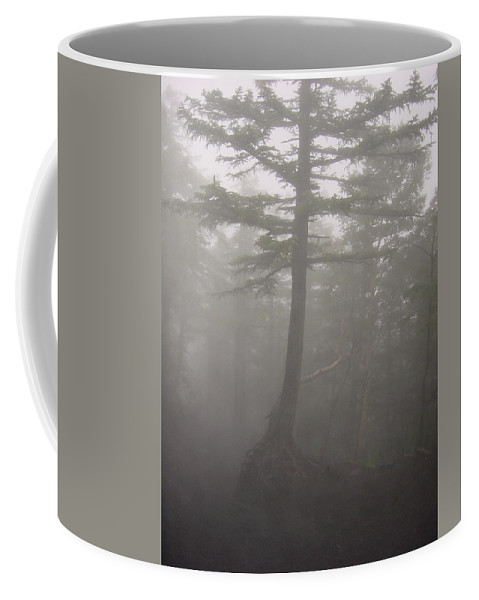 Forrest Coffee Mug featuring the photograph Haunted Forest by D Turner