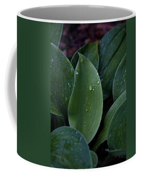 Hossta Coffee Mug featuring the photograph Hosta Dew Drops by Douglas Barnett