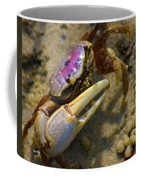 Topsail Island Coffee Mug featuring the photograph Have You Seen My Fiddle by Betsy Knapp