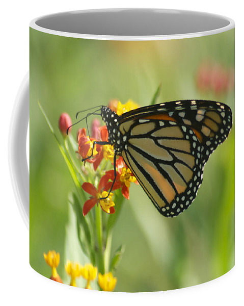 Wildlife Coffee Mug featuring the photograph Hawaiian Monarch 1 by Michael Peychich