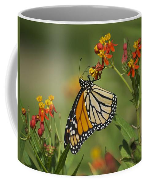 Wildlife Coffee Mug featuring the photograph Hawaiian Monarch 2 by Michael Peychich