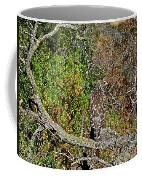 Birds Coffee Mug featuring the photograph Hawk In Hiding by Diana Hatcher