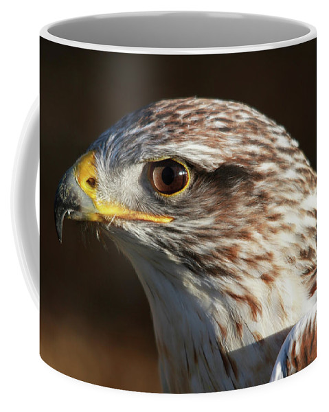 Hawk Coffee Mug featuring the photograph Hawk by Safe Haven Photography Northwest