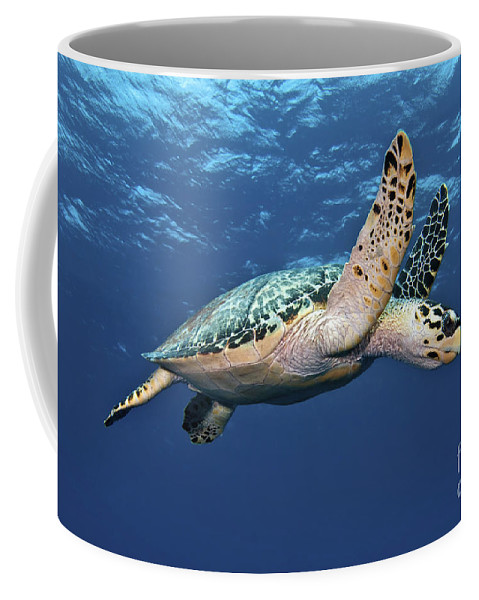 Caribbean Coffee Mug featuring the photograph Hawksbill Sea Turtle In Mid-water by Karen Doody