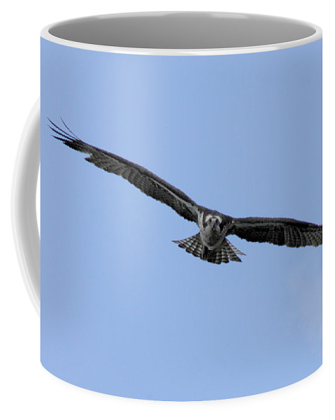 Bird Coffee Mug featuring the photograph Head On by Donna Blackhall