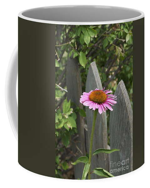 Pink Shasta Coffee Mug featuring the photograph Heads Up by Penny Neimiller