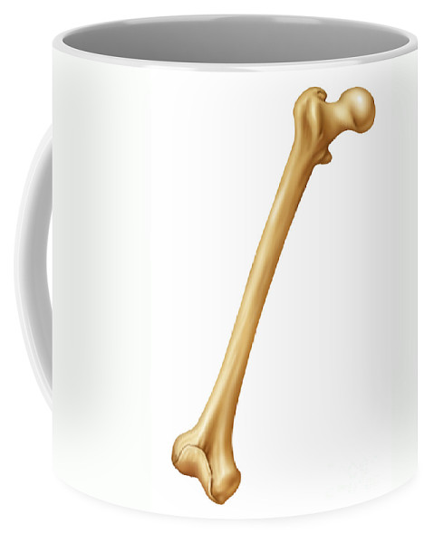 Science Coffee Mug featuring the photograph Healthy Femur, Illustration by Gwen Shockey