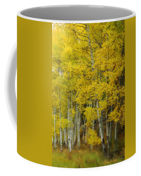 Birch Trees Coffee Mug featuring the photograph Heavenly Light by Donna Blackhall