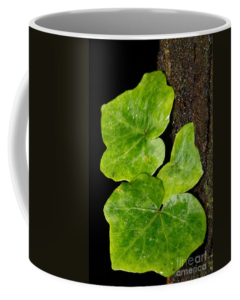 Hedera Coffee Mug featuring the photograph Hedera by Gaspar Avila