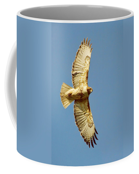 Nature Coffee Mug featuring the photograph Hello Down There by Crystal Massop