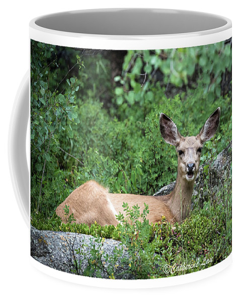 Deer Coffee Mug featuring the photograph Hello From A Deer by Catherine Lau