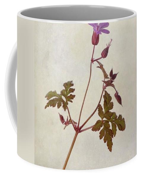Beautiful Coffee Mug featuring the photograph Herb Robert - Wild Geranium  #flower by John Edwards