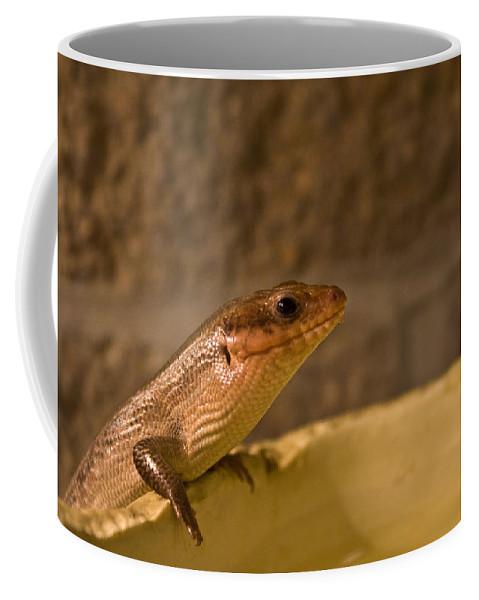 Skink Coffee Mug featuring the photograph Here by Douglas Barnett