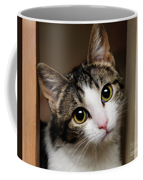 Fine Art Cat Coffee Mug featuring the photograph Here Kitty Kitty by Andee Design