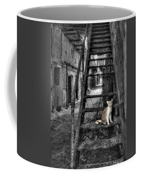 Abandoned Coffee Mug featuring the photograph Here Kitty Kitty Kitty... by Evelina Kremsdorf