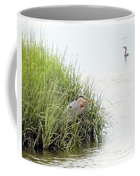 Great Blue Heron Coffee Mug featuring the photograph Heron And Cormorant by Al Powell Photography USA