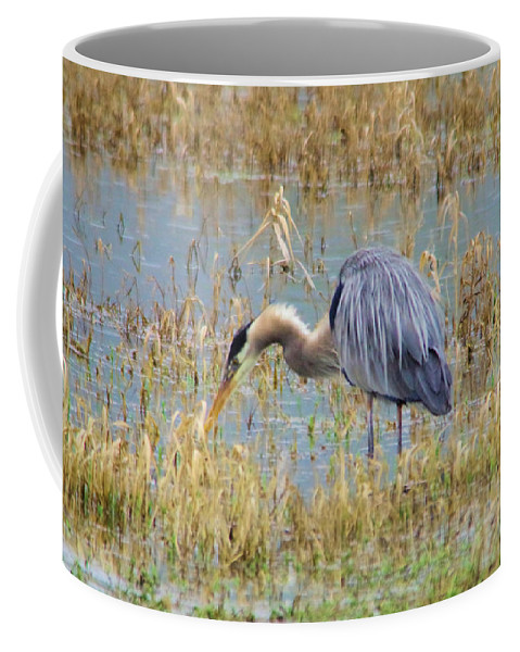 Water Bird Coffee Mug featuring the photograph Heron Hunting In Shallows by Jeff Swan