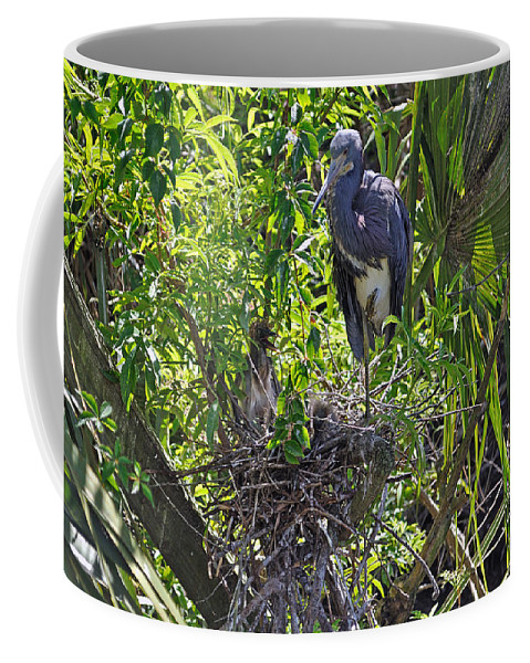 Heron Coffee Mug featuring the photograph Heron With Chick In Nest by Kenneth Albin