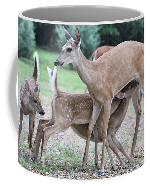 Deer Coffee Mug featuring the photograph Hey, Can I Have Some? by Bobbie Moller
