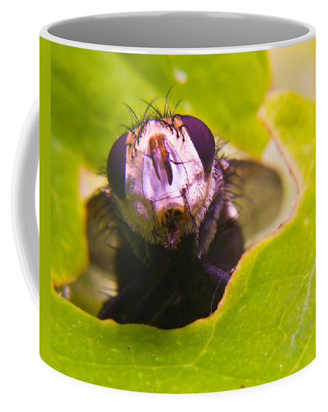 Fly Coffee Mug featuring the photograph Hi There by Douglas Barnett