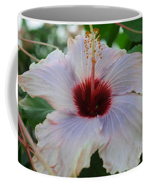 Hibiscus Coffee Mug featuring the photograph Hibiscus Beauty by Kathleen Struckle