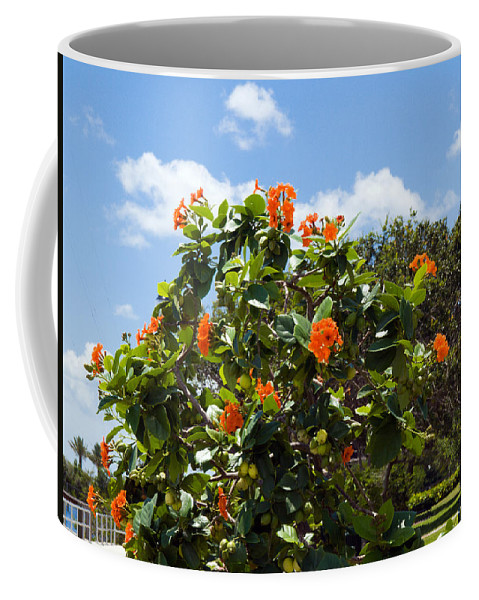 Hibiscus; Rosasinensis; Rosa; Sinensis; Rosa-sinensis; Tree; Bush; Shrub; Plant; Flower; Flowers; Fl Coffee Mug featuring the photograph Hibiscus Rosasinensis With Fruit by Allan Hughes