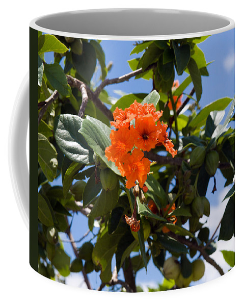 Hibiscus; Rosasinensis; Rosa; Sinensis; Rosa-sinensis; Tree; Bush; Shrub; Plant; Flower; Flowers; Fl Coffee Mug featuring the photograph Hibiscus Rosasinensis With Fruit On The Indian River by Allan Hughes