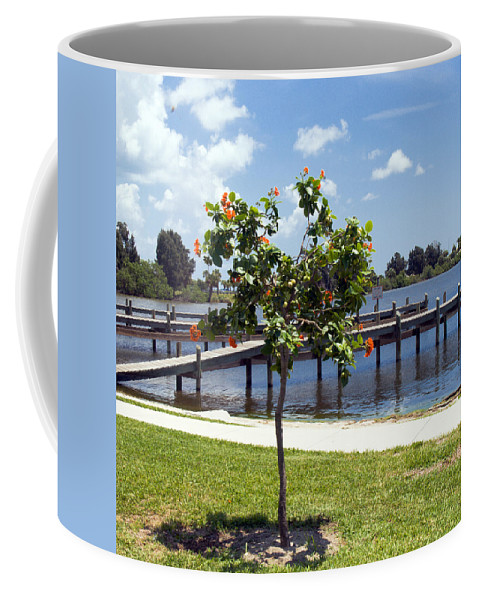 Hibiscus; Rosasinensis; Rosa; Sinensis; Rosa-sinensis; Tree; Bush; Shrub; Plant; Flower; Flowers; Fl Coffee Mug featuring the photograph Hibiscus Rosasinensis With Fruit On The Indian River In Florida by Allan Hughes