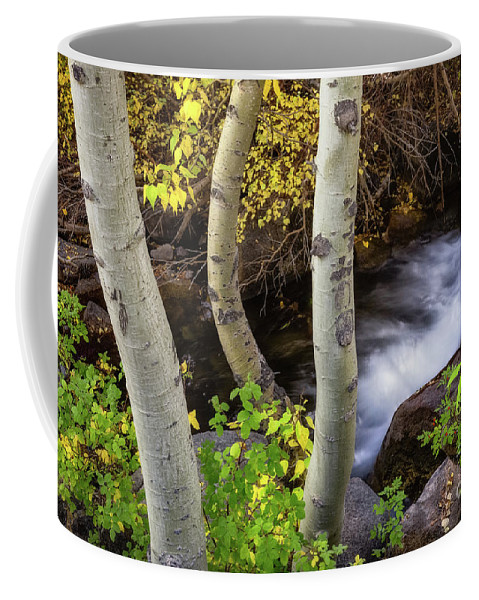 Aspens Coffee Mug featuring the photograph Hidden Stream by Anthony Bonafede