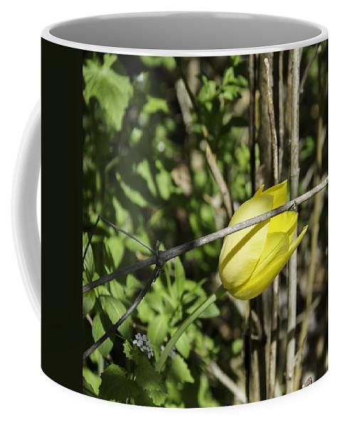 Flowers Coffee Mug featuring the photograph Hidden Yellow Tulip by Teresa Mucha