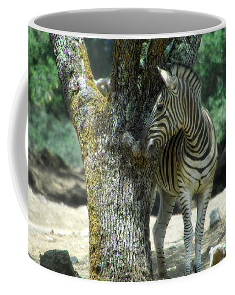 Zebra Coffee Mug featuring the photograph Hide And Seek by Donna Blackhall