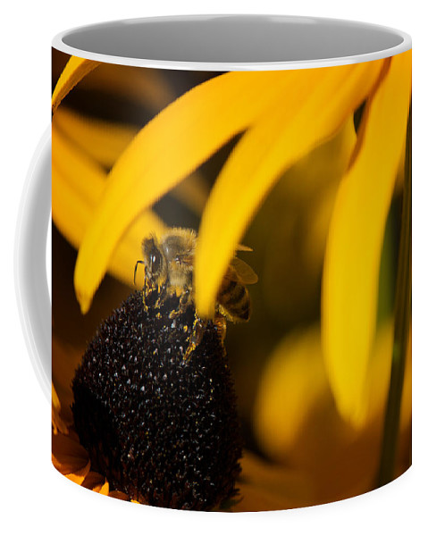 Hide Coffee Mug featuring the photograph Hide And Seek by Lisa Knechtel