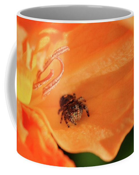 Spider Coffee Mug featuring the photograph Hiding In Plain Sight by Barbara Treaster