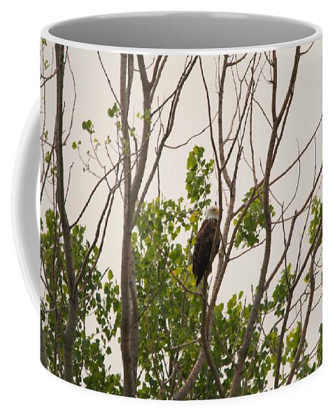 Bald Eagle Coffee Mug featuring the photograph Hiding In Plain Sight by Linda Kerkau
