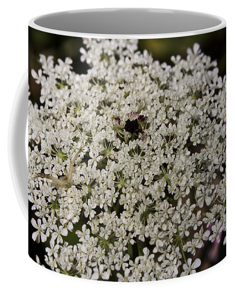 Queen Coffee Mug featuring the photograph Hiding In The Lace by Teresa Mucha