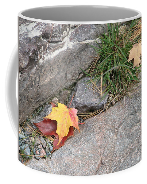 Fall Coffee Mug featuring the photograph Hiding by Kelly Mezzapelle