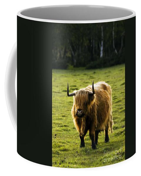 Heilan Coo Coffee Mug featuring the photograph Highland Cattle by Angel Tarantella