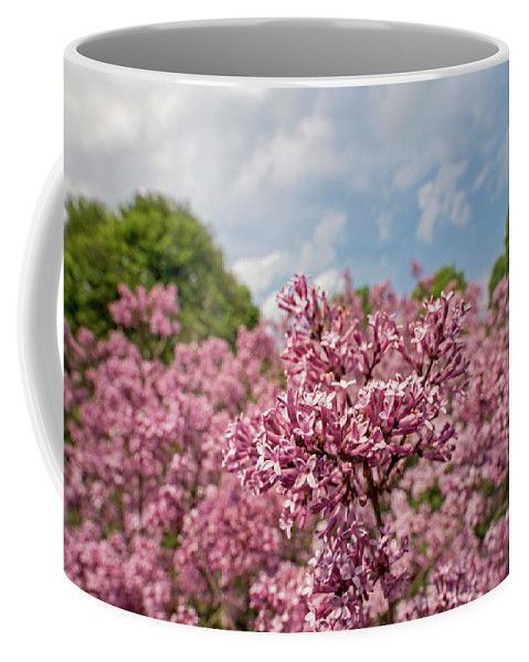 Highland Coffee Mug featuring the photograph Highland Park Lilacs Detail Rochester Ny by Toby McGuire