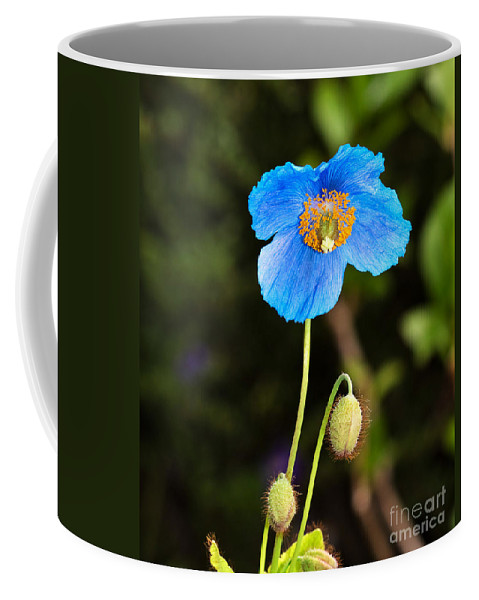 Flower Coffee Mug featuring the photograph Himalayan Blue Poppy by Louise Heusinkveld