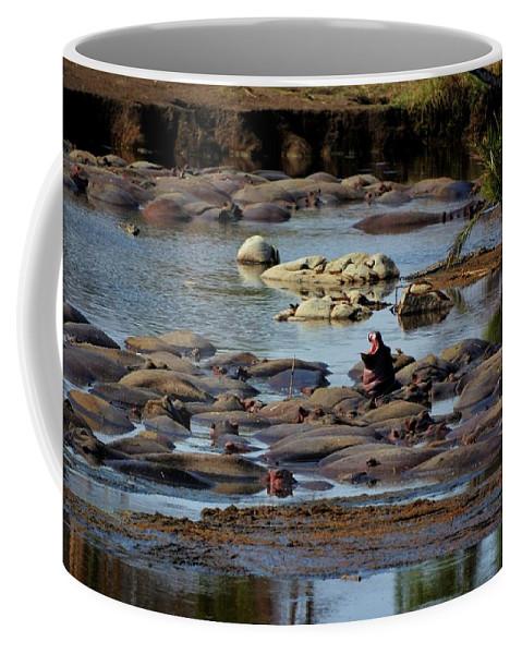 Hippo Coffee Mug featuring the photograph Hippo Raft by Kenneth Imler