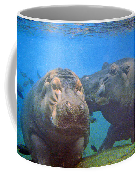 Animals Coffee Mug featuring the photograph Hippos In Love by Steve Karol
