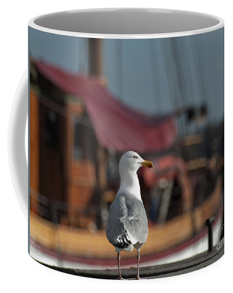 Festblues Coffee Mug featuring the photograph Hmm... Sooo... East Or West Today... by Nina Stavlund