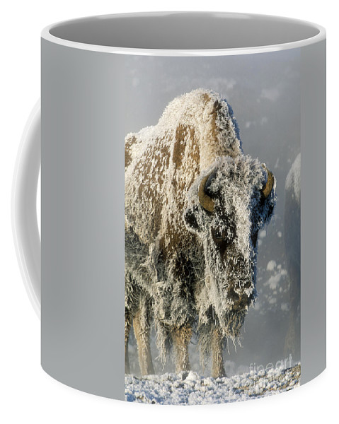 Bison Coffee Mug featuring the photograph Hoarfrosted Bison In Yellowstone by Sandra Bronstein