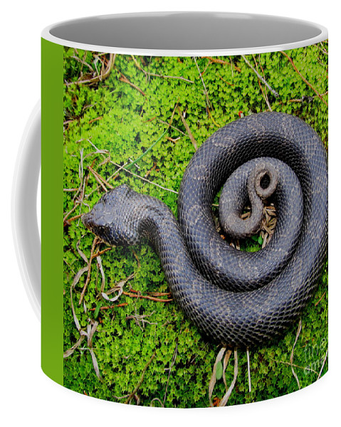 Eastern Hognose Snake Coffee Mug featuring the photograph Hognose Spiral by Joshua Bales