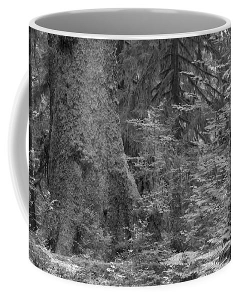 Hoh Coffee Mug featuring the photograph Hoh Rain Forest 3369 by Bob Neiman