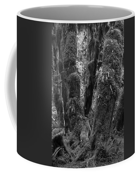 Hoh Coffee Mug featuring the photograph Hoh Rain Forest 3406 by Bob Neiman