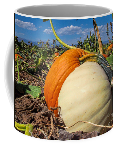 Pumpkin Patch Coffee Mug featuring the photograph Hold Me Tight by Jim Garrison