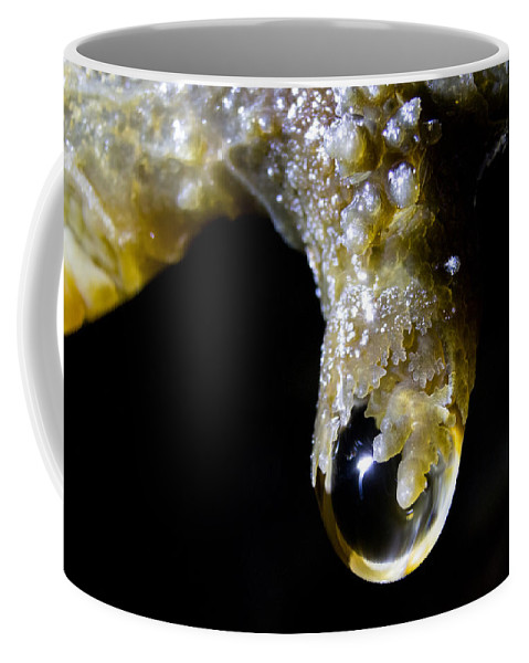 Lava Coffee Mug featuring the photograph Holding On by Marnie Patchett